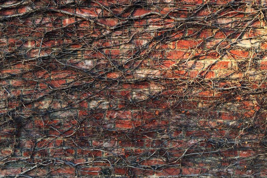 Bricks Light And Shadow Morning Light Creeper Plant Foliage Plant Pattern Texture Nature Wall Brick Wall Brick Overgrown