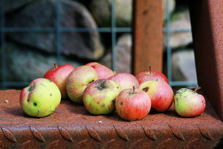 Country Living Apple - Fruit Bad Condition Close-up Country Life Day Food Food And Drink Freshness Fruit Green Color Harvest Healthy Eating Nature No People Outdoors Red Rotten Rotting