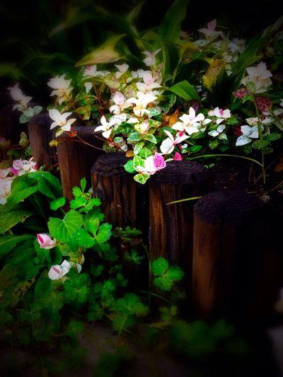 Fiowers Flower