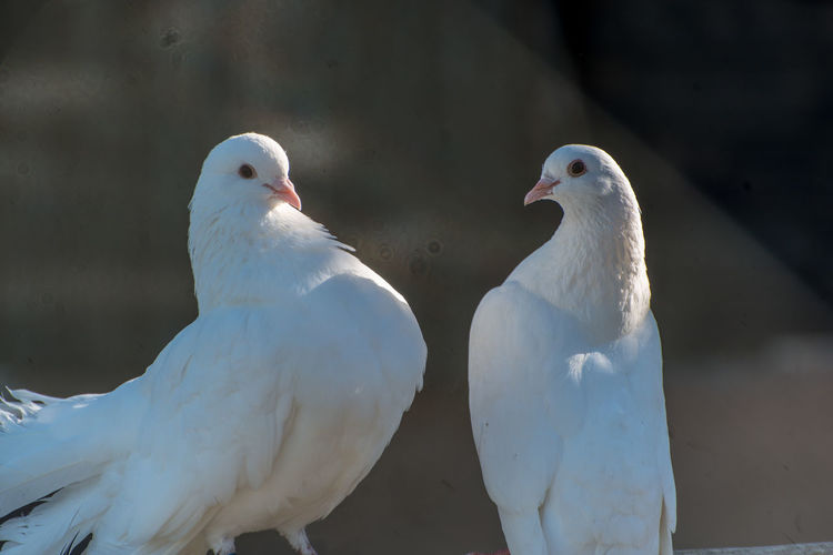 Close-up of doves perching outdoors