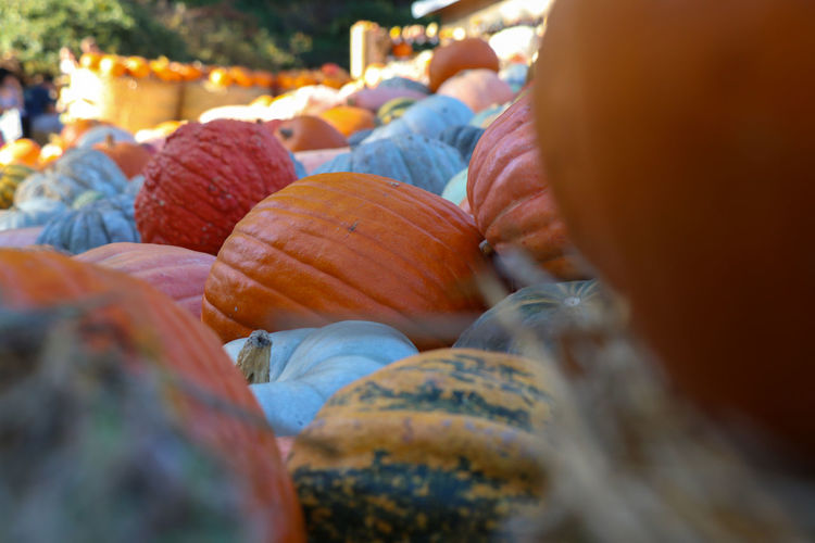 Pumpkins for sale Food And Drink Selective Focus Food Healthy Eating Choice Freshness Market Wellbeing Close-up Retail  Day Variation Large Group Of Objects Pumpkin For Sale Market Stall Incidental People Orange Color People Still Life