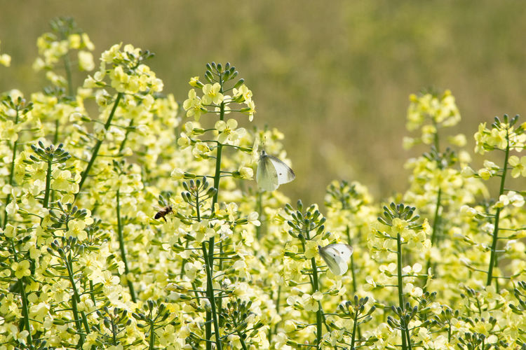 Insects pollinating on green flowers blooming outdoors
