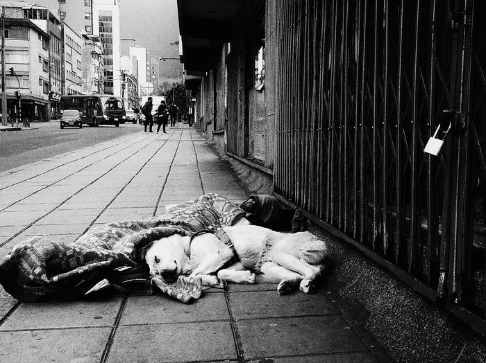 Outdoors City One Person Homeless Person Homeless Man Bogotá Colombia Homeless Homelessness  Real People Dog Love dog Friend Friendship