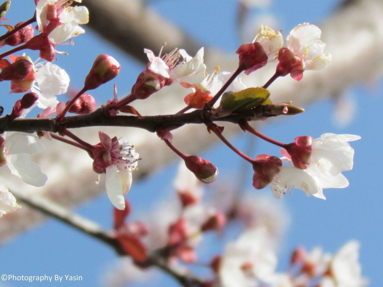 flower, growth, fragility, beauty in nature, nature, tree, freshness, springtime, day, branch, low angle view, petal, blossom, no people, outdoors, close-up, sky, blooming, flower head