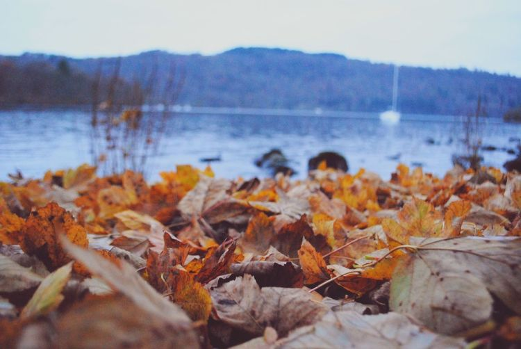 Ground with leaves by a lake Leaves Memories Autumn EyeEm Gallery Eyemphotography Water Tree Lake Flower Winter Leaf Autumn Sky Close-up Plant