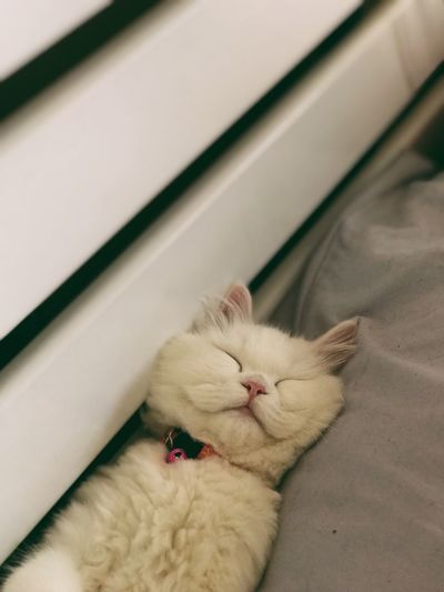 พักก่อนน Cat
