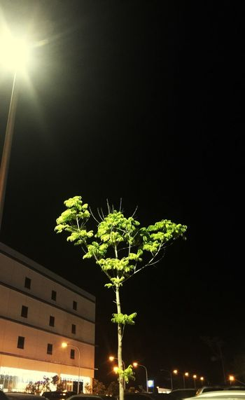 RePicture Growth Dark Night Tonight Dark Night Nightphotography Night Lights Looks Like A Stick Man Doing His Flex