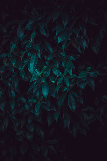 Full frame shot of leaves at night