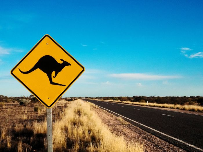 endless roads... Endless Highway Australia Exploring Outback Down Under Travelphoto Landscape Travel Photography A New Beginning EyeEm Selects EyeEmNewHere Roadtrip Nature Backpacking Adventures Nopeople Road Sign Road Yellow Blue Danger Warning Sign Crossing Sign Sky Close-up Kangaroo Australian Culture South Australia Warning Symbol