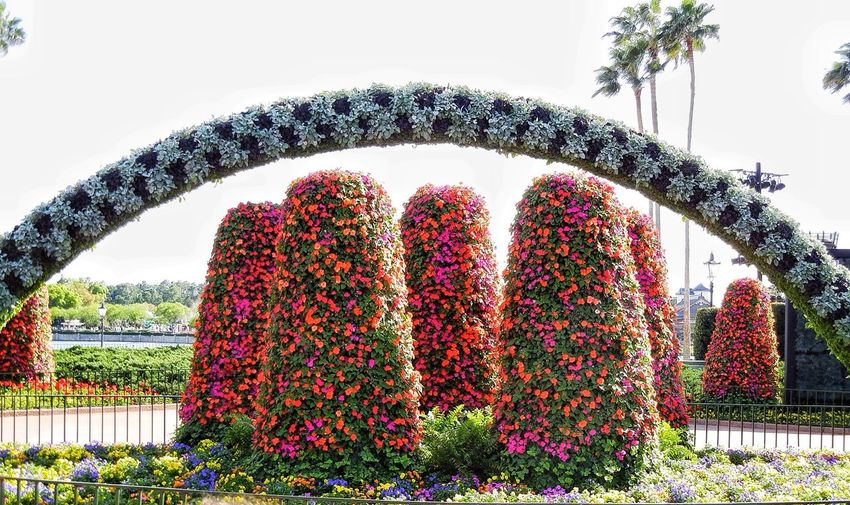 Disney Flowers HDR Collection Nature