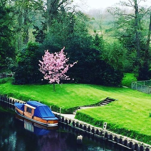 Nature River River Dee  Boat Reflection Scenery Tree Cherry Blossom Pink Color Tranquility In Bloom Water Beauty In Nature Freshness