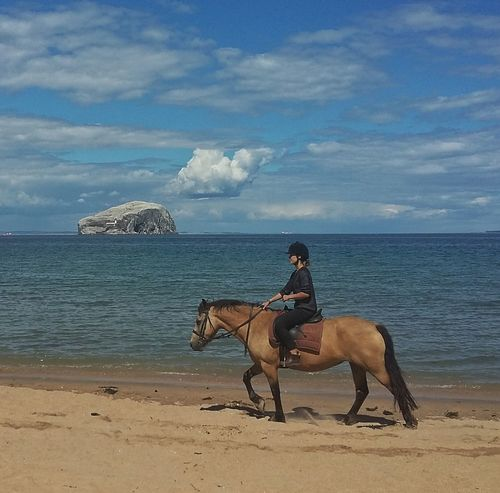 Beach Blue Sky Sea Sea And Sky Sand Horse Riding Bassrock Water