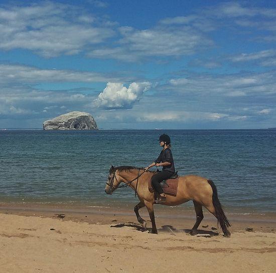 Beach Blue Sky Sea Sea And Sky Sand Horse Riding Bassrock Water