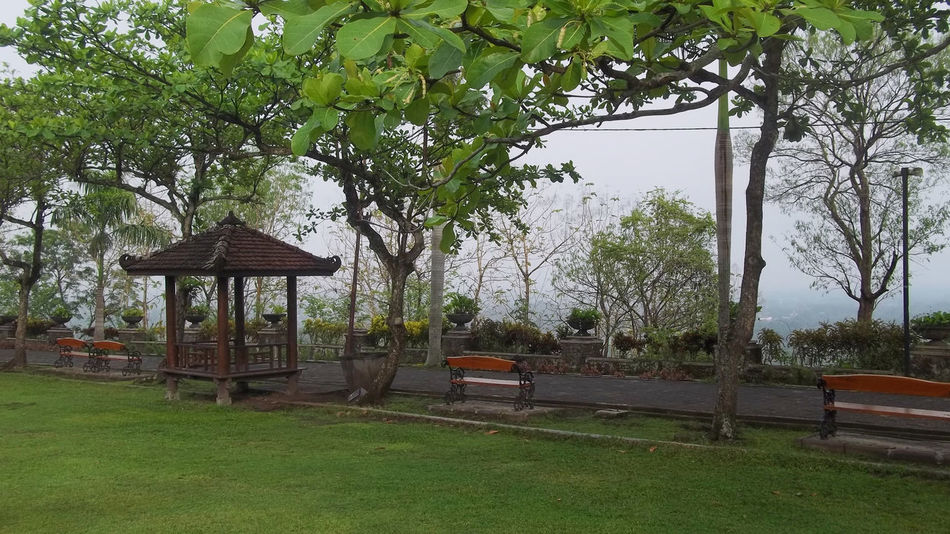Nature Garden on Ratu Boko Temple Nature Nature Photography Architecture Beauty In Nature Branch Day Grass Green Color Growth Javanese Garden Landscape Nature Nature Garden Nature_collection Naturelovers No People Outdoors Ratu Boko Ratu Boko Tample Ratu Boko Temple Rijall Rijall Blues Rijallblues Sky Tree