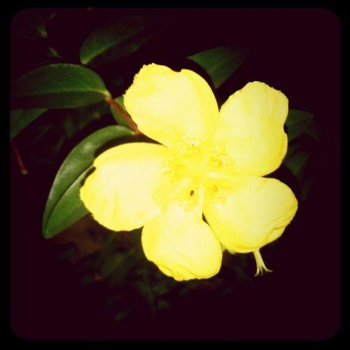 the last flower on my flower bush