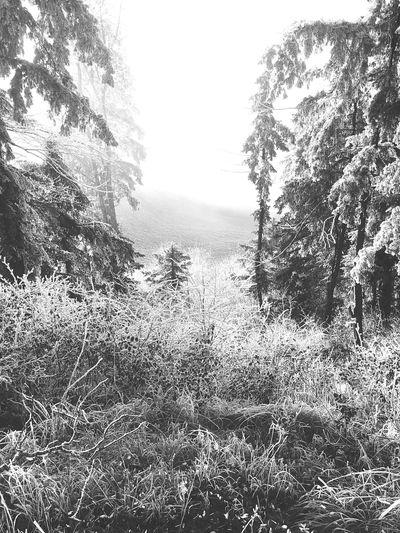 FrozenForest