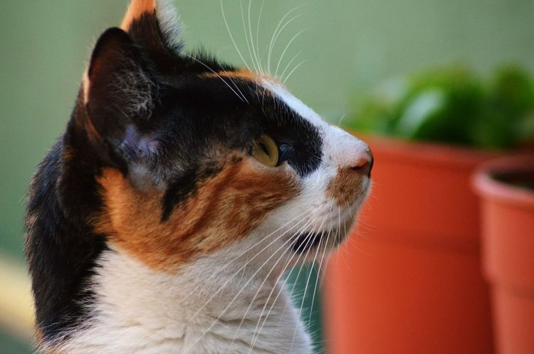 Pets One Animal Domestic Animals Portrait Outdoors Cat