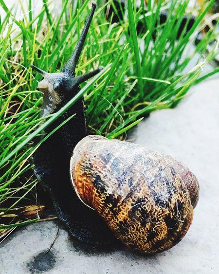 First Eyeem Photo Snail Garden Photography