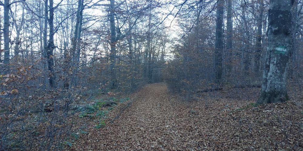 Autumn карпати гори Гори Україна Ukraine Mountains Trees Tree