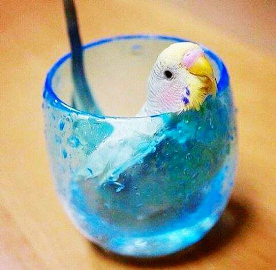 Patty!!! MY PAtty Parrot Lover Cute Pets Parrot Lovers Check This Out Make It Yourself Enjoying The Colours Taking Photos Bummy