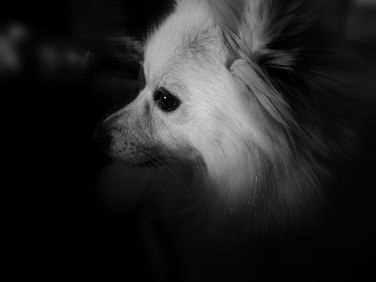 One Animal No People My Love Dog