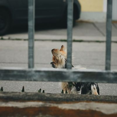 Beware The Dog! VSCO Dog Passau