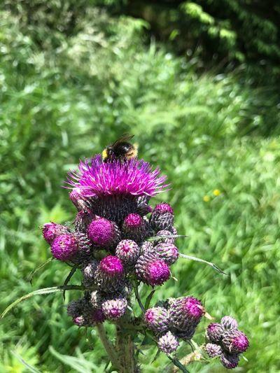 Pollinators, wild Animal , Pollen ,nature