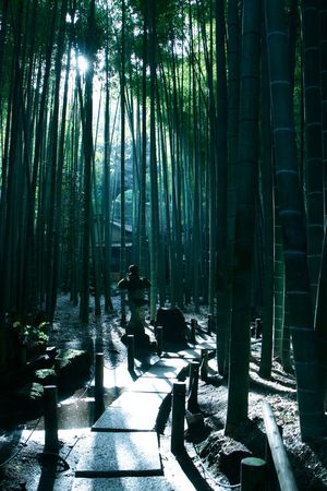 Bamboo Bamboo Forest Beauty In Nature Canon Forest Growth Japan Japan Photography Light Light And Shadow Lights Natural Beauty Nature Nature Photography Nature_collection Outdoors Path Pathway Sunlight Sunshine The Great Outdoors - 2016 EyeEm Awards Tranquil Scene Tranquility Tree WoodLand