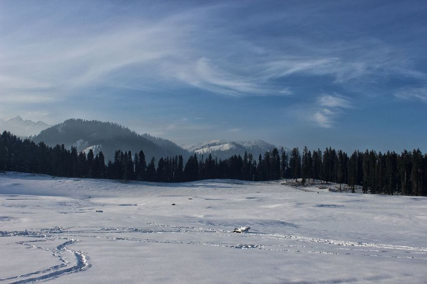 Snow covered meadows of Doodpathri in Kashmir. EyeEmNewHere Kashmir Photography Getty Images Photooftheday Winter Tree Cold Temperature Snow Forest Sky Landscape