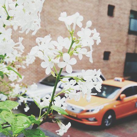 Spring Snap Yeah Springtime! 꽃 일상 봄 Daliy Gpro2 Flower