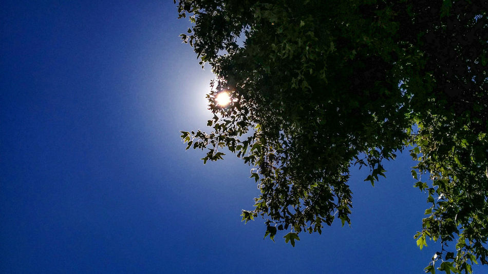 Life Life Tree Sun Sky Perspective Simplicity Warm Safety Nature Sunshine Leaf Blue Sky Malibu California Best