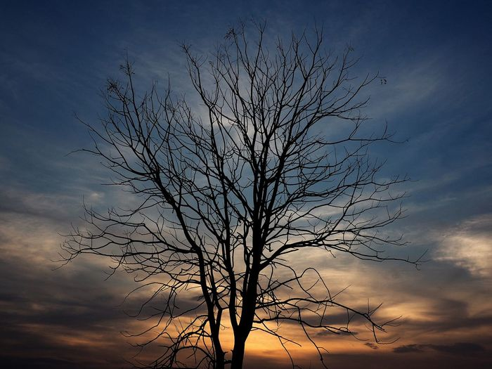 Dead tree with sunset in the background Low Light Sunsey Sky Tree Plant Nature Beauty In Nature Branch Silhouette No People Cloud - Sky Bare Tree Low Angle View Sunset Tranquility Outdoors Scenics - Nature Tree Trunk Environment Bird Trunk Tranquil Scene
