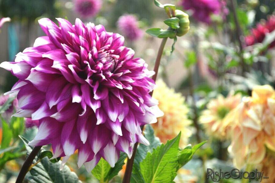 Flower Head Flowerlovers Flowernature