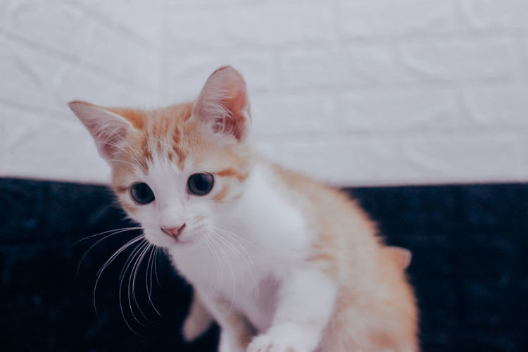 Close-up portrait of cat with kitten at home