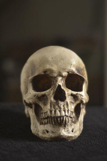 Art Bones Close-up Detail Focus On Foreground Horror Macabre No People Part Of Selective Focus Skeleton Skull Still Life Teeth