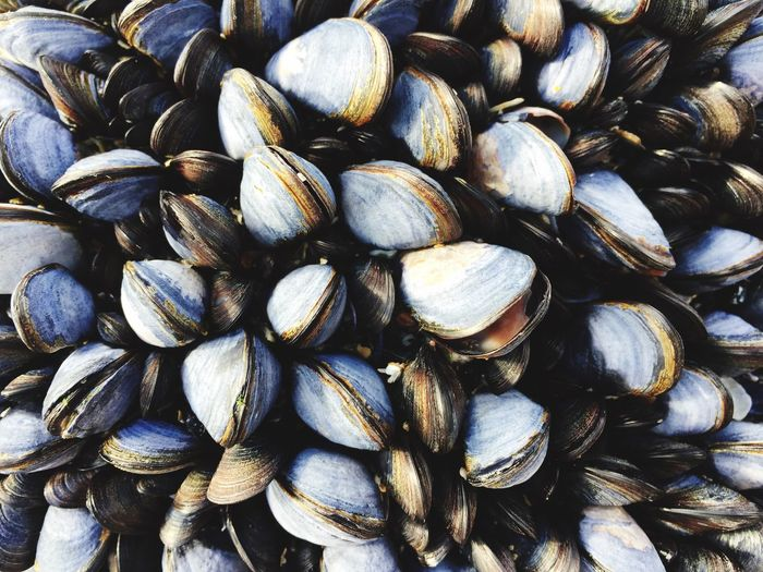 Muscles EyeEm Selects Full Frame Large Group Of Objects Backgrounds Abundance No People Pattern Close-up Textured  Still Life Day Wellbeing Food And Drink Healthy Eating Repetition Freshness Nature Food Shell Outdoors Stack