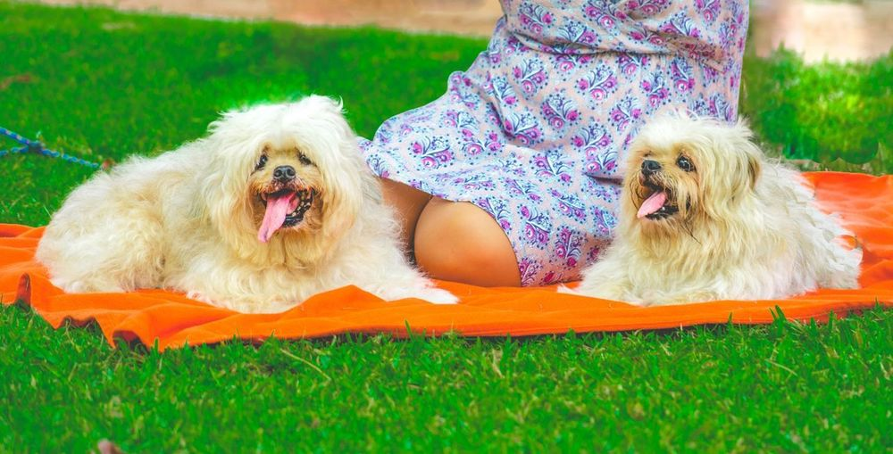 Animal Themes Day Dog Dog Love Dog Lovers Dogs Domestic Animals Enjoying Life Exceptional Photographs Eye4photography  EyeEm Best Shots Family Time Lying Down Nature Outdoors Pets Photoshoot Popular Photos Portrait Smiling They Are Family