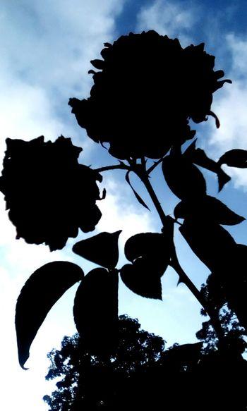 Siluetas conversando Silhouette Dark Black Afternoon Melancholic Landscapes Rose🌹 Depression - Sadness I Miss You Light Blue Sky