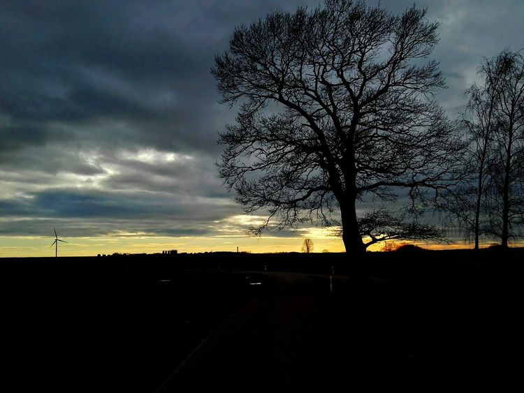 Sunset Silhouette Tree No People Sky Nature Outdoors Day Nature Beauty In Nature Sun Sunday Cloudy Cloudy Day EyeEmNewHere
