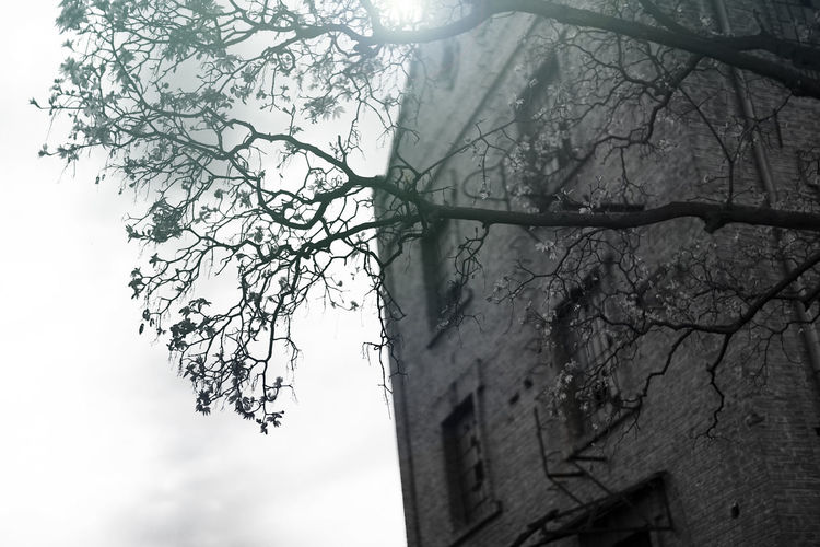 old abandoned building and a tree in front of it Building Old Abandoned Tree Branch Photo Black White Bricks Sky Day Exterior Outdoors Messy Retro Warehouse Built Grunge City Factory Destruction Art Windows Architecture Empty Broken Construction Nobody Urban Background Decay Ancient Vintage Dirty Ghetto Structure Industry Industrial Wall Scene History Ruins Object Antique Brick Aging Concept Stones Plant Design