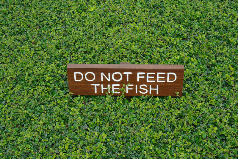 Close-up of do not feed the fish message among green plants
