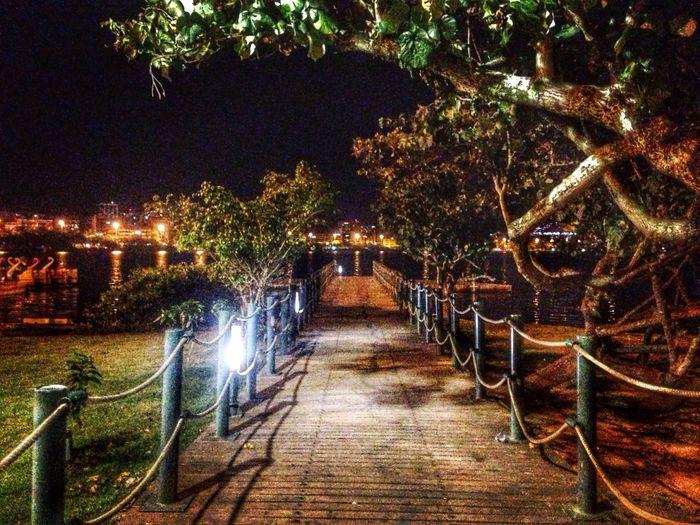Night Illuminated Nature