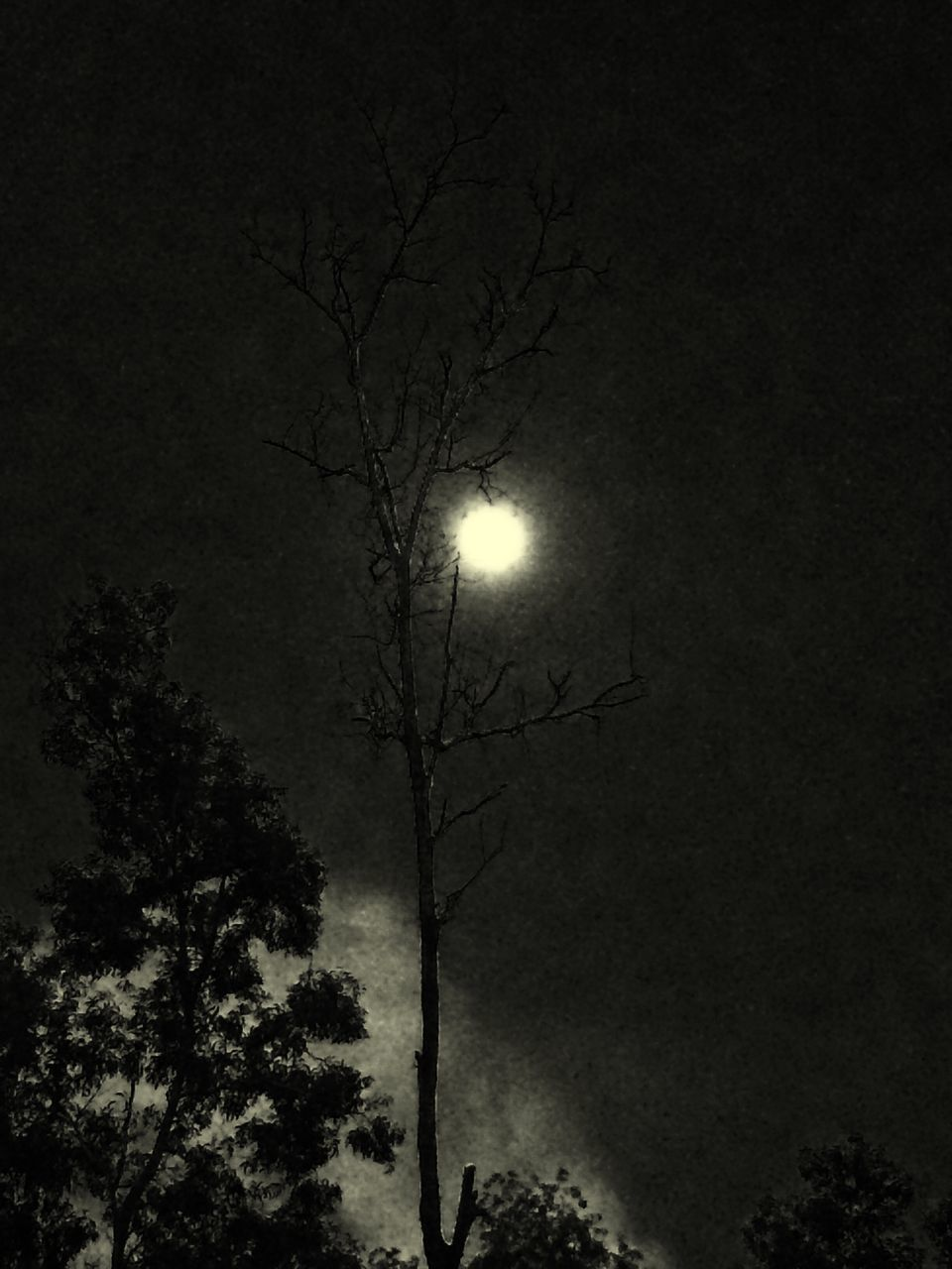moon, tree, low angle view, night, silhouette, illuminated, nature, outdoors, no people, moonlight, sky, branch, bare tree, beauty in nature, astronomy