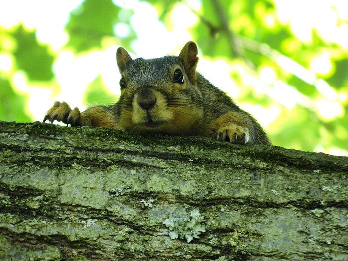 Can i help you? Animal Wildlife No People One Animal Green Color Animal Themes Outdoors Nature Animals In The Wild Day Close-up Tree Mammal Squirrel Photo Squirrel Photography Squirrel! Squirrel In A Tree Curiosity.
