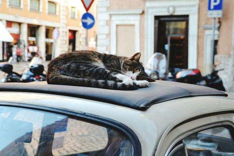 Close-up of cat sleeping on car