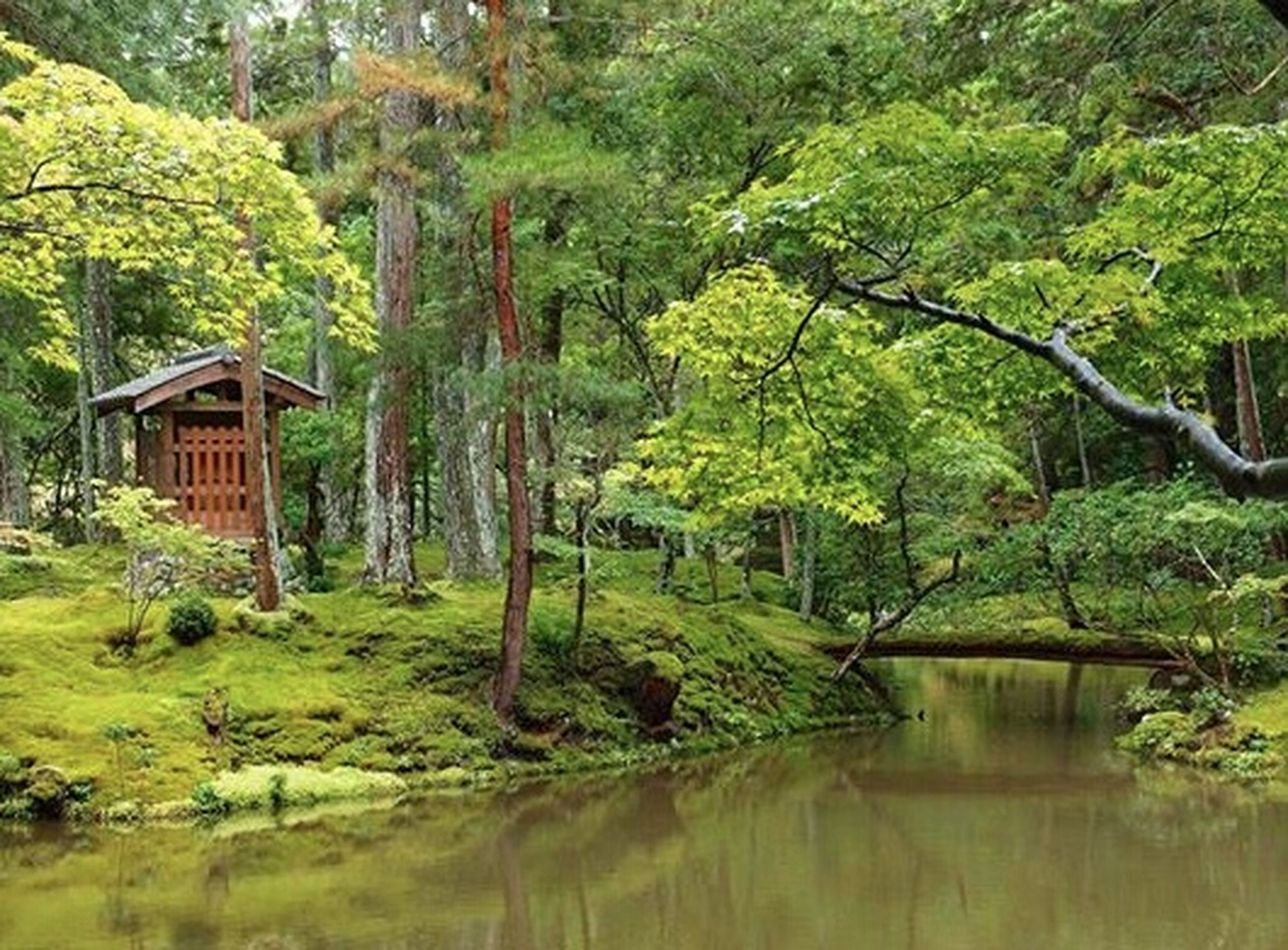 tree, water, reflection, green color, built structure, architecture, growth, tranquility, waterfront, tranquil scene, lush foliage, nature, building exterior, canal, beauty in nature, forest, house, river, scenics, plant