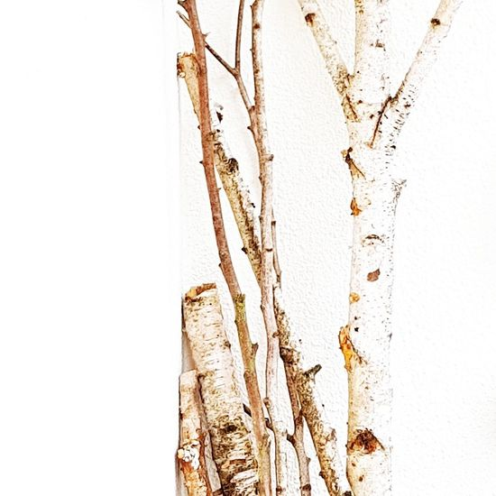 Birch Wood Birch Trees Birch Bark Backgrounds Close-up Outdoors Nature Minimalism Selective Focus Beauty Nature Simple Photography EyeEm EyeEm Best Shots EyeEm Gallery Full Frame Light And Shadows Beauty In Nature White Background Leaning Lean On Each Other Straight Lines