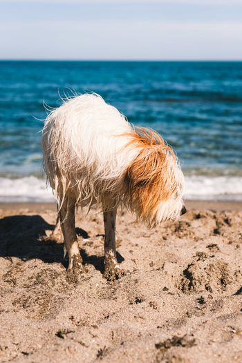 View of an animal on beach