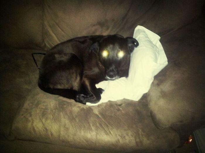 wanker stole my pillow