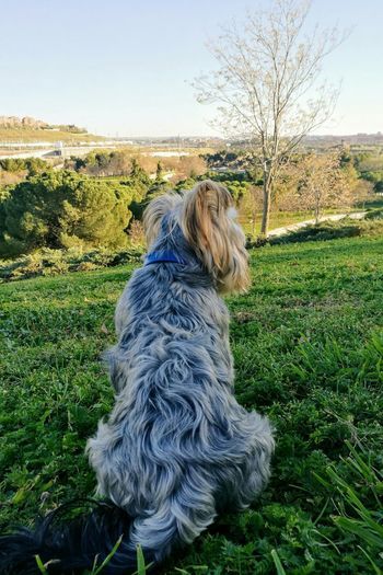 Dog One Animal Pets Domestic Animals Day Sky Nature SPAIN Love Madrid Nice Day Capture Moments Sky Day Nature Madrid Spain Clear Sky Blue Nice